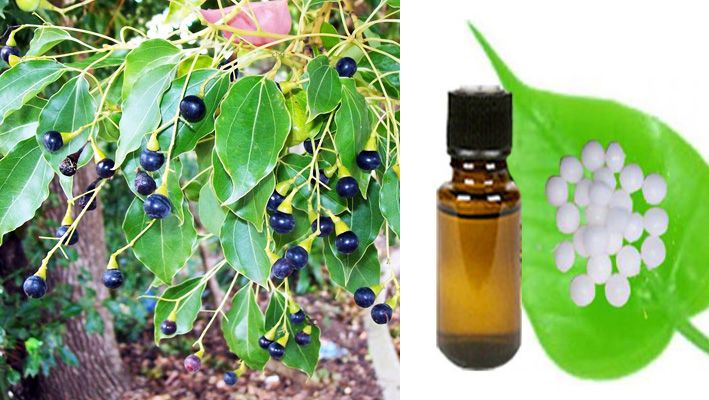 Meaning Of Kapoor Ka Tel In English How Does Camphor Oil Look Like