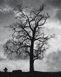 the tree on the grave